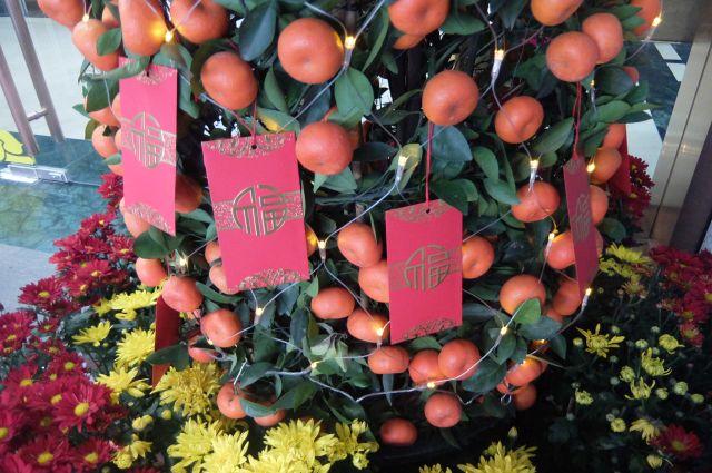 電飾やポチ袋や花々でみかんの木を彩る