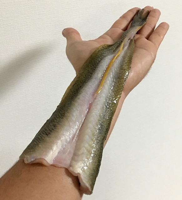 圧倒的なボリューム。というか長さ。脂がよく乗っていて、撮影後は腕と手がヌメッヌメになった。※熱で身が傷むのでこういう持ち方はやめよう。ヌメッヌメになるし。