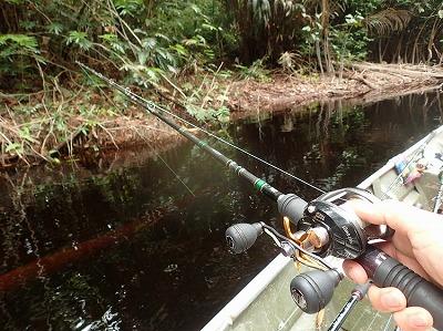 生け捕りにするのであれば、釣りがもっとも確実な方法。入水して網で掬おうとすると感電してしまう恐れがある。