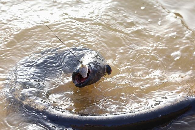 水中で「食らう」のがマズいんだそうな。