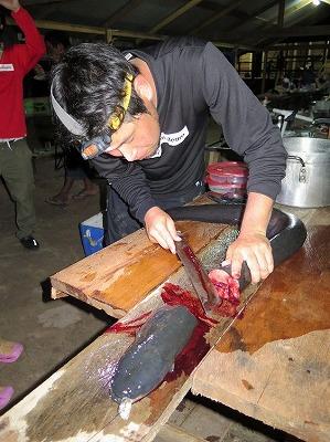山刀でデンキウナギを捌く。とても発見の多い解剖となった。