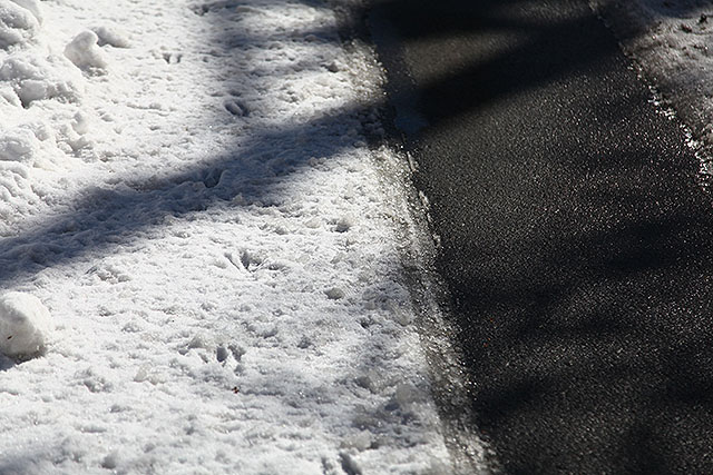 鹿の足跡。