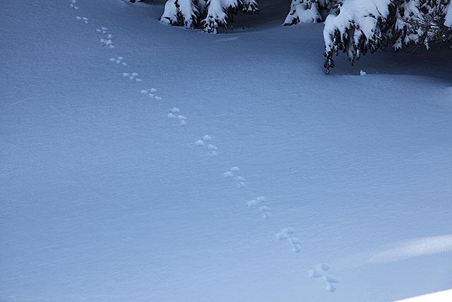 兎の足跡。
