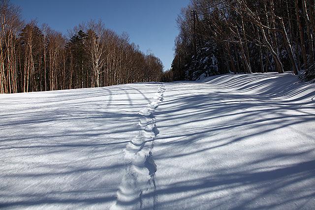 標識がない部分はただの雪原にしか見えないが、下にはアスファルトの国道がある。