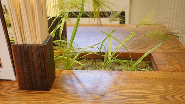 テーブルのすきまから雅が生えてくる町、京都