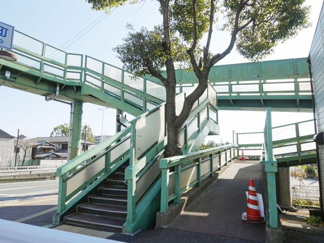 昇降口は、先ほどと同じく右に「スロープ」、左に「階段」という構造になっている。隙間を縫うように生えている木がチャームポイント