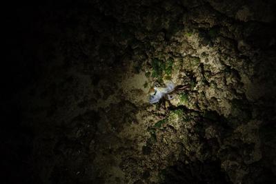岩べりに打ち上げられた青白い物体を発見。魚じゃないな。
