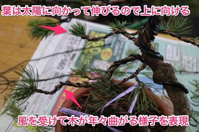 木の人生を想像して枝を曲げていく。