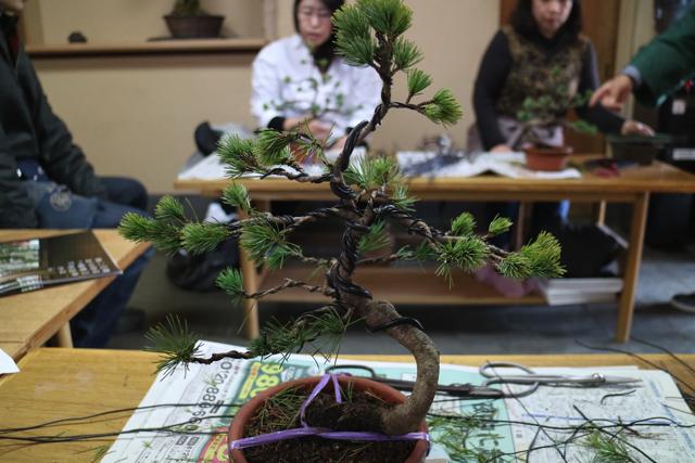 教えてもらいながら作業をしてようやく完成。全部で1時間くらいかかったけど、自分なりに木の一生を想像して作った。