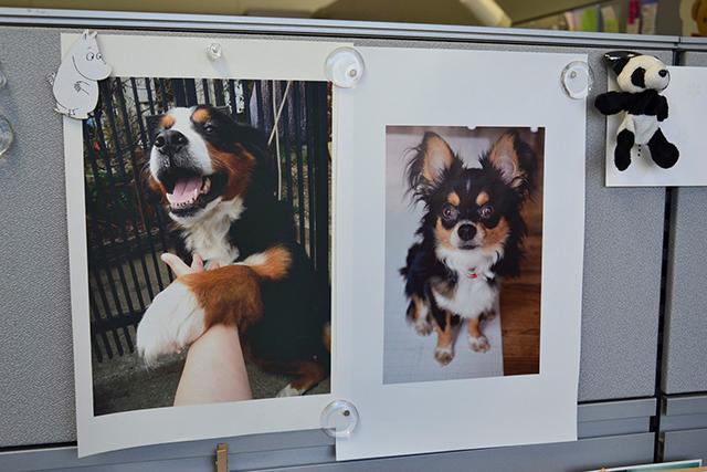 下の写真は飼っているチワワの犬太(いぬた)ちゃん