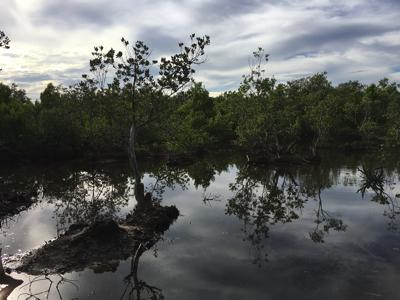 マングローブへ分け入るよ。今回は現地の漁師さんにお願いして、特に流木が多いエリアへ案内してもらった。