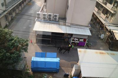 帰りにモノレールを待っているときに馬が歩いているのが見えた。これも競馬場でのフリーマーケットならではの特権だ。得した気分になった。