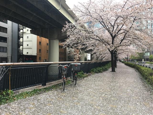 特に何があるという町ではないけど、神田川沿いの桜はキレイです