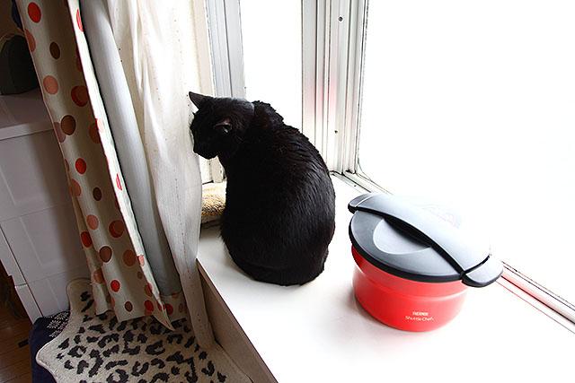 出窓に置いたら猫が興味を持った。