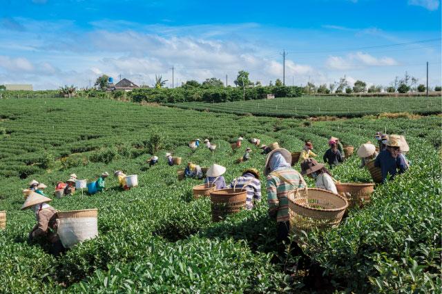 静岡にはお茶を持て余す人たちがたくさんいる!!
