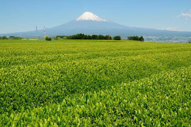 え!?静岡県民はお茶飲みで有名なんじゃ…