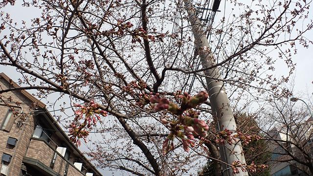 地主くんの見上げる空に、満開の花が咲く日は近い。