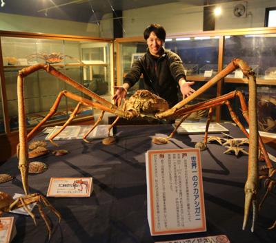 そして戸田といえばコレ!世界最大のカニ、タカアシガニ!でけえ。はんぱねえ。