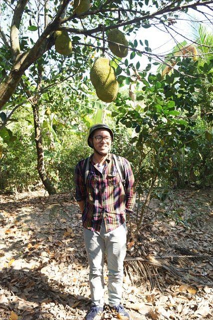 世界最大の果物・ジャックフルーツも実っていた。高さはないが、これも直撃したらむちうちにはなりそうだ。