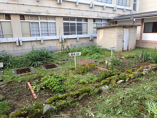 棟の間には中庭があり、園芸を楽しむことだって可能だ。