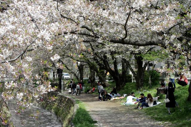 土曜ということもあり、シートを引いて花見を楽しんでいる人も多い