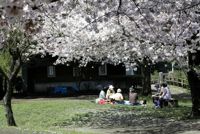 平日の昼間ではあるが、シートを引いて花見をしているご婦人方もいた