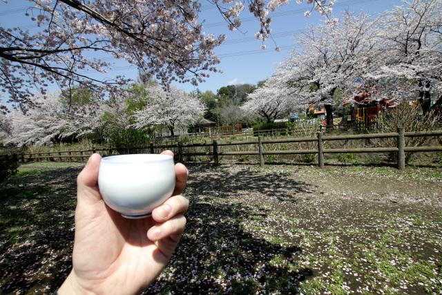 うーむ、平日の昼から桜の下で飲むお酒の味は格別だ