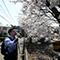 花見散歩で愛でるご近所桜