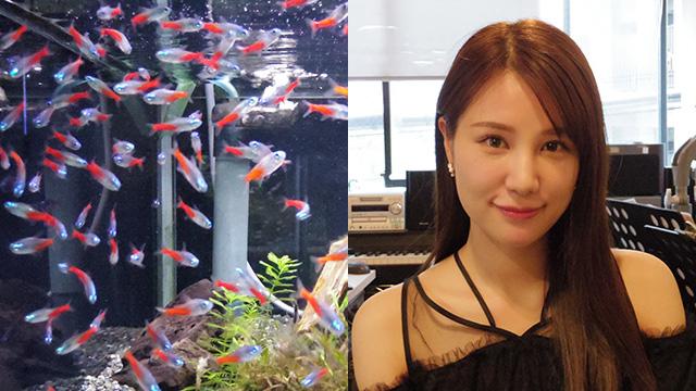 熱帯魚とトップアイドル