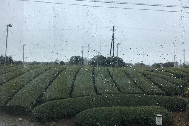 あいにくの雨だが、お食事処の窓からは一面に広がる茶畑が臨める