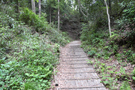 看板に従ってこんな感じの山道を進んでいくと……