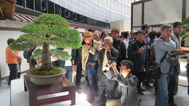 盆栽の世界大会が28年ぶりに日本に帰ってきた