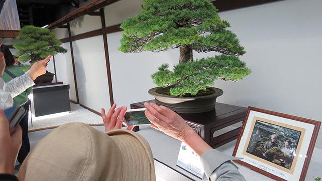 こちら川端康成が愛した盆栽。文学と盆栽の交点でおじいさんたちの興奮はピークに達する!