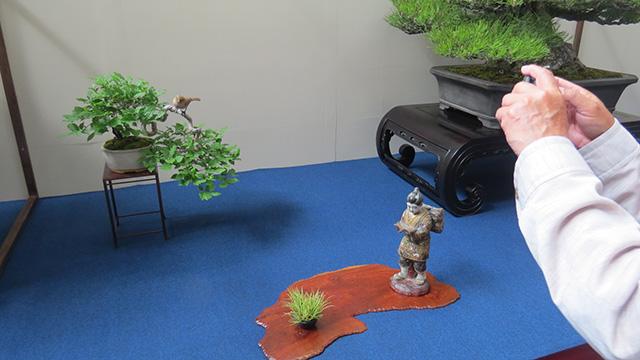 盆栽の展示はメインの盆栽、掛け軸、水石など、とセットになってるそうだがわりとフリーダムなものが置かれている