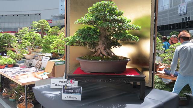 盆栽の販売ブースもある。販売ブースの中で立派なもの888万円也