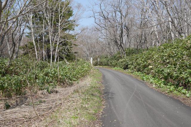 林道に入ると、さっきまでの道のりは何だったのかと思えるような舗装された道が続く