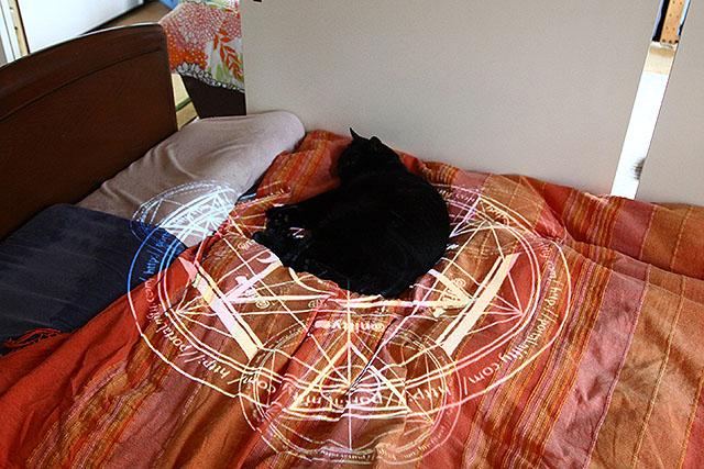 寝てる猫に魔法陣を投影すると、より生贄感が出ます。猫を対価にPVを稼ぎます。