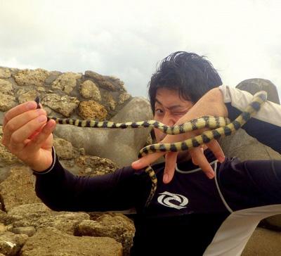 ウミヘビとか