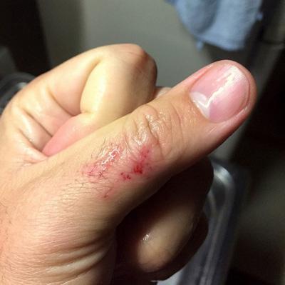 意外と顎の力が強い。親指を口に入れて下顎を掴んだところ、がっぷり噛みつかれてヤスリ状の歯で皮がズタズタに…。持ち上げる際は手網に入れるか、フィッシュグリップで下顎を掴もう。
