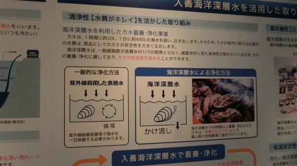 海洋深層水がカキの安全性を高める。食べてみたいな。