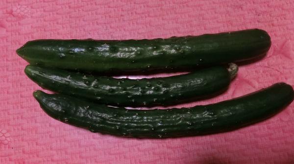 夏野菜の季節ですね。