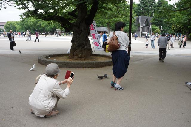 気付くと散策中のご婦人がカメラを構えてハトとハトヒールとのシャッターチャンスを狙っていた。今頃インスタに上がってるだろうか。