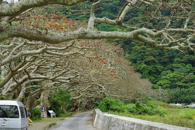 枝ぶりに妖怪味のあるでいご並木。