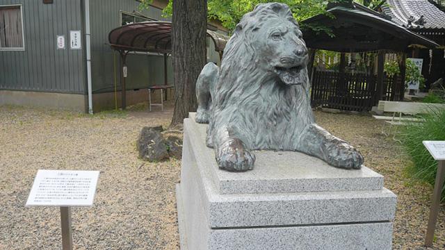 神社にライオンがいる