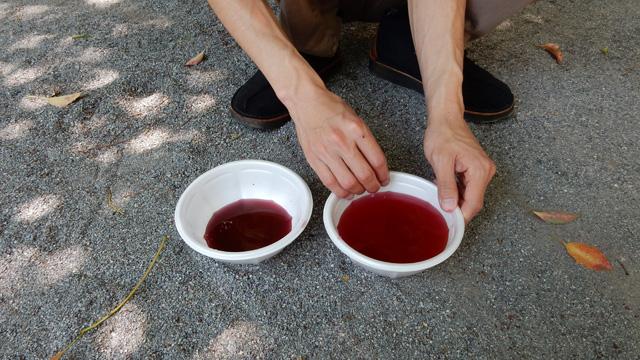 絵の具を溶いた色水です。