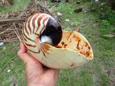 貝殻は洗ってお土産に…と思ったが、残念ながら2016年から国外への持ち出しが禁止になってしまったそうな。これを機にオウムガイ漁師の在り方も大きく変わってくるのだろう。