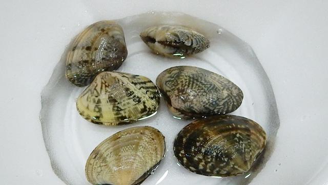 貝の模様って見ていて飽きない。貝ごとに全然違うのが良い。