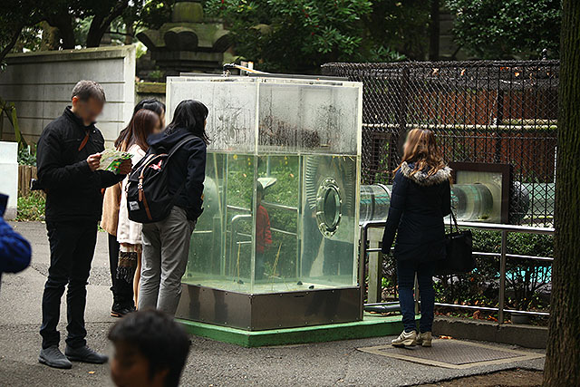 上野動物園のユーラシアカワウソのケージ。アクリルの箱で檻内と繋がってる。