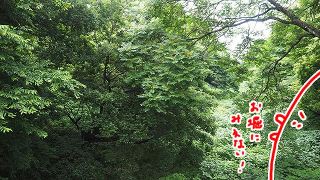 堀の内側の大部分はこんな状態。森になってる。