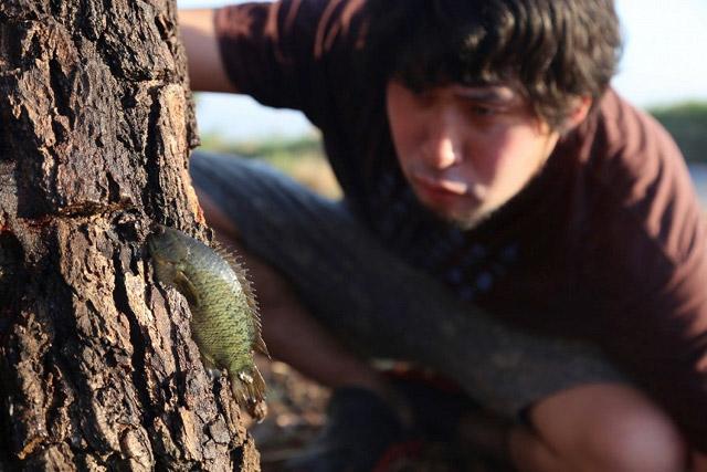 名前は聞いたことのあるキノボリウオ、はるばるタイでその木登り力を試します。個人的にはちょっとびっくりの結果です(石川)